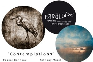 Contemplation:Parallax