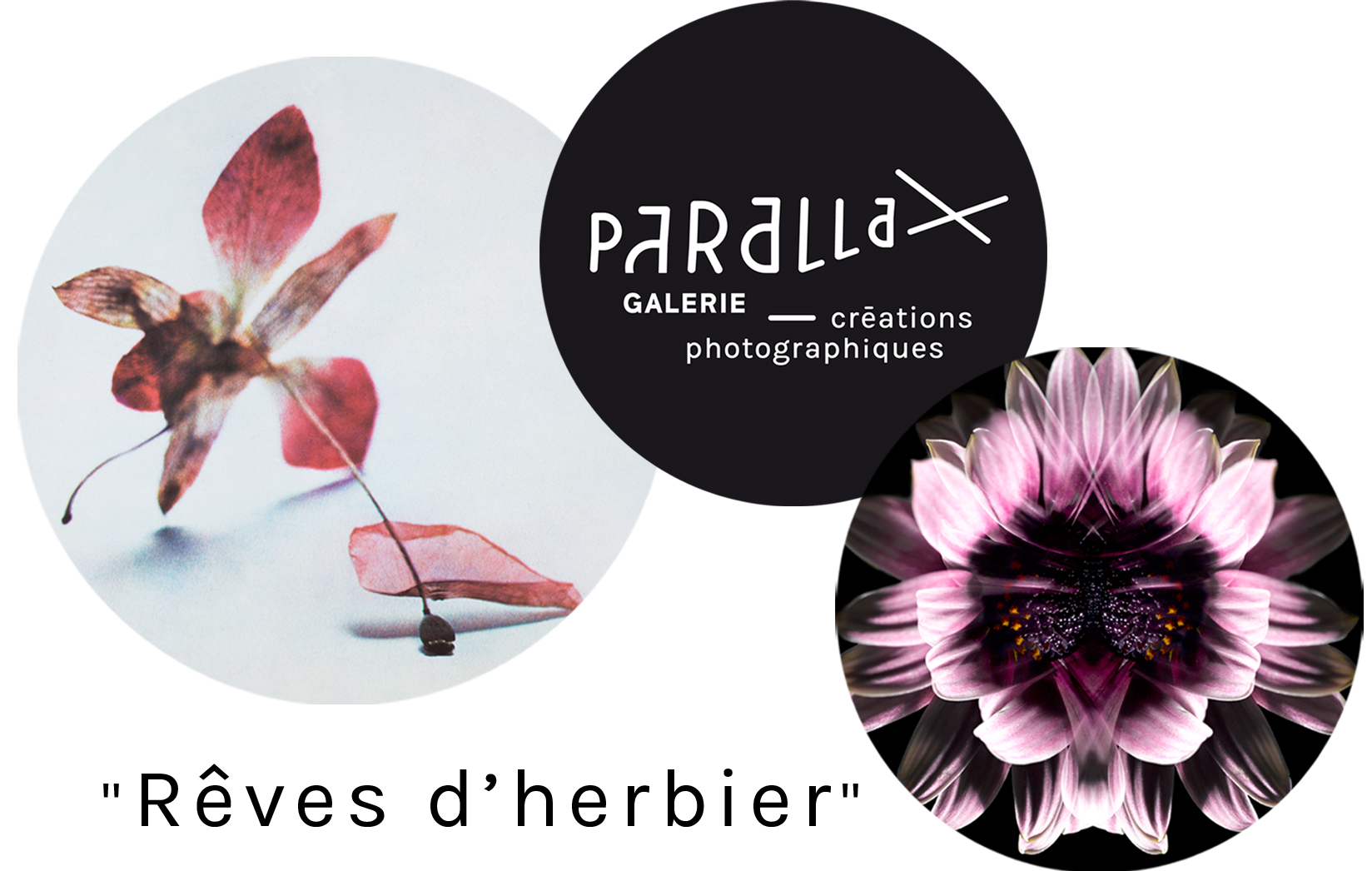 "Vernissage de l'exposition ""Reves d'herbier"""