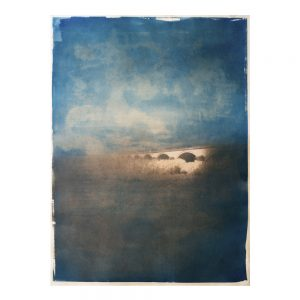 photographie, cyanotype, art contemporain, tanin