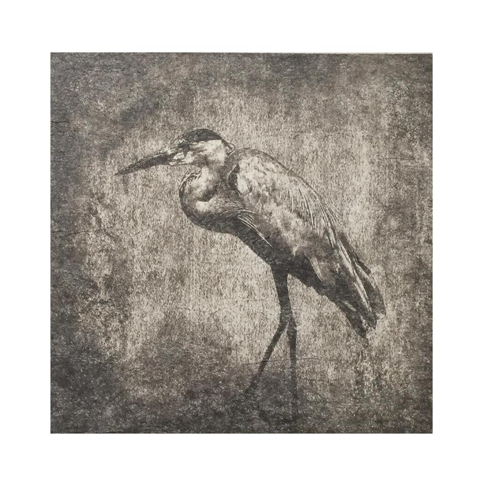 Heron, photographie, art