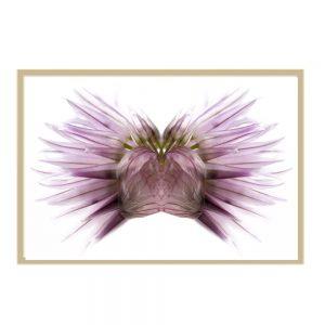 miroir vegetal, aix en provence, photographie contemporaine, galerie d'art