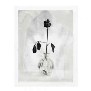 polaroid, art, photographie, galerie d'art, aix en provence