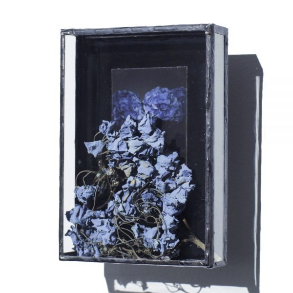 photographie,hortensia, polaroid, bleu, nuit