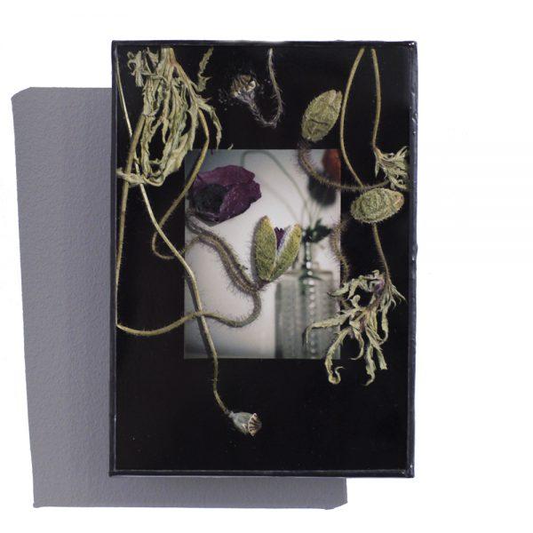 polaroid,fleurs,coquelicot